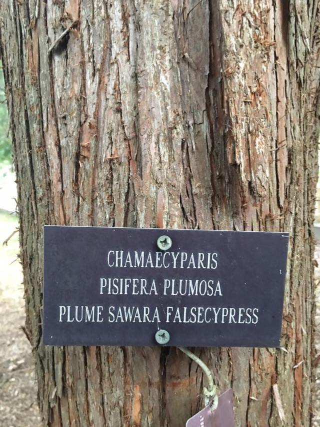 tree-mantra